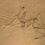 Archaeopteryx: bird or reptile?